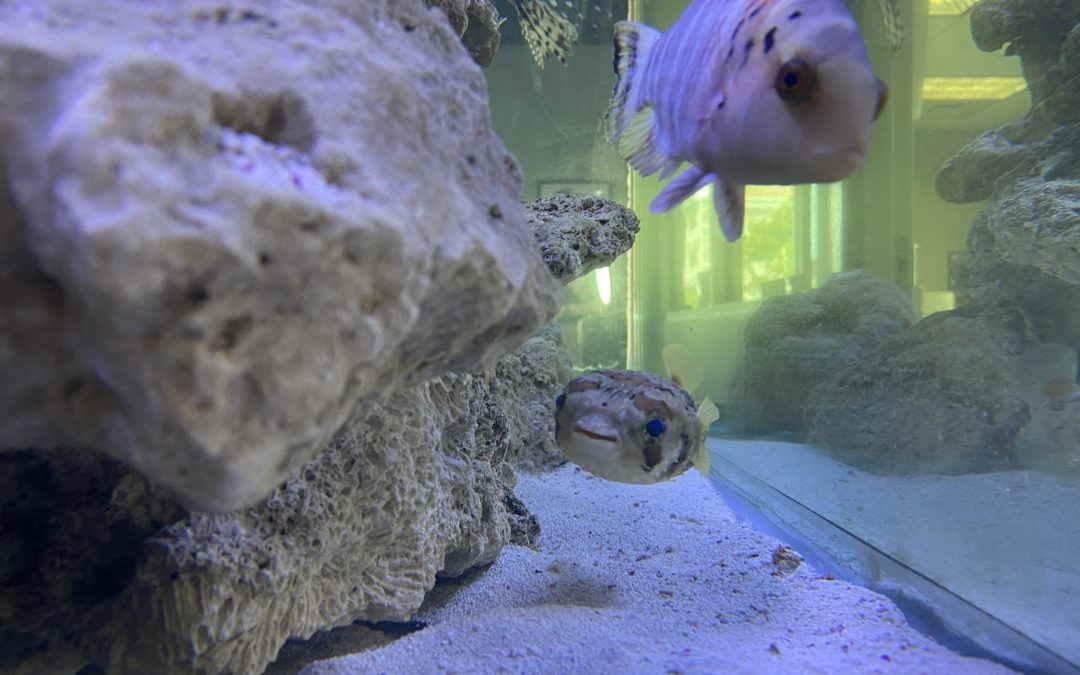 Our Predatory Fish Tank is One-of-a-Kind
